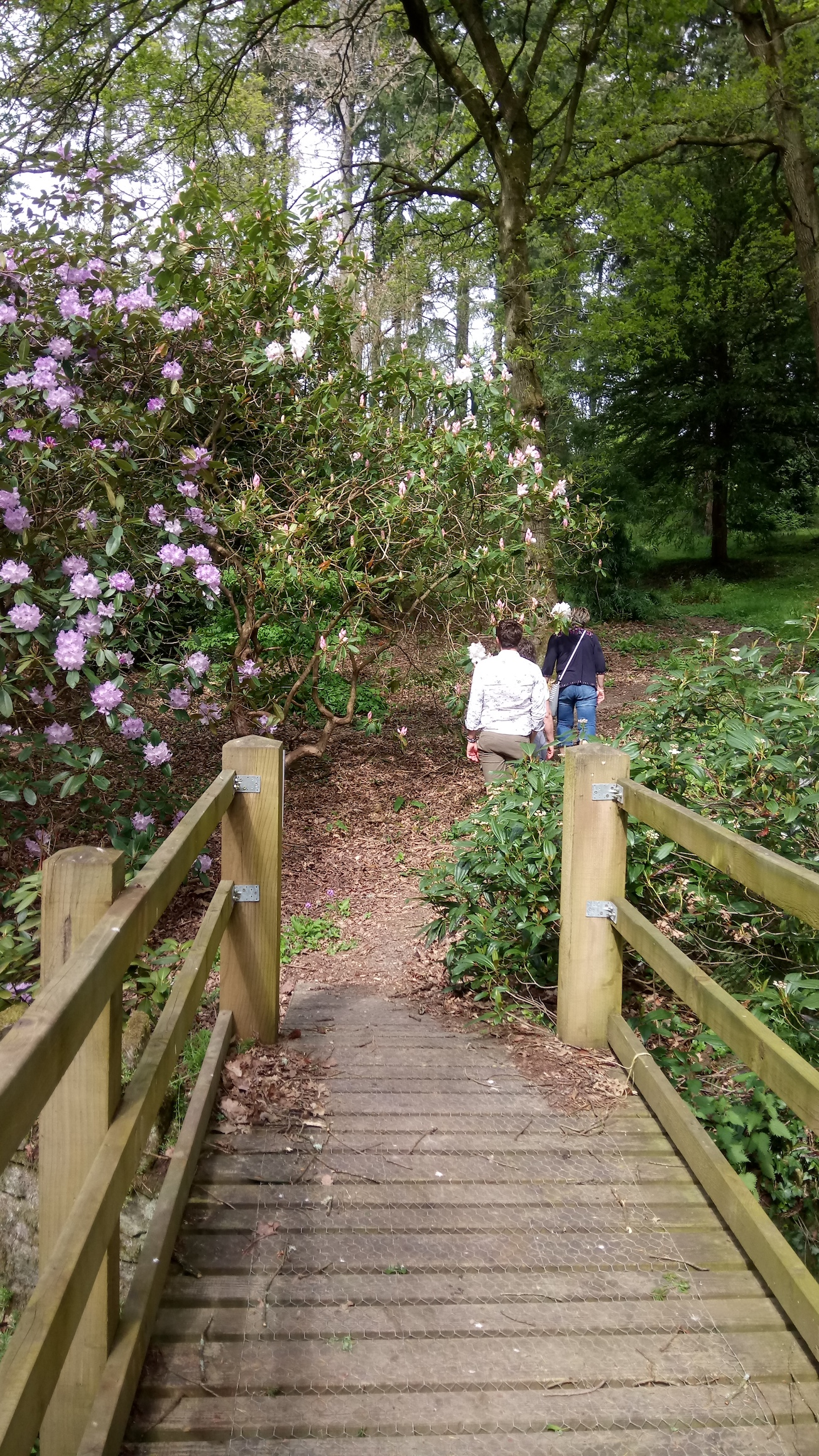 Kentchurch Rhododendrons